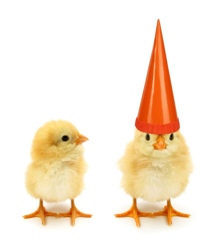 Two chicks, one wearing a party hat