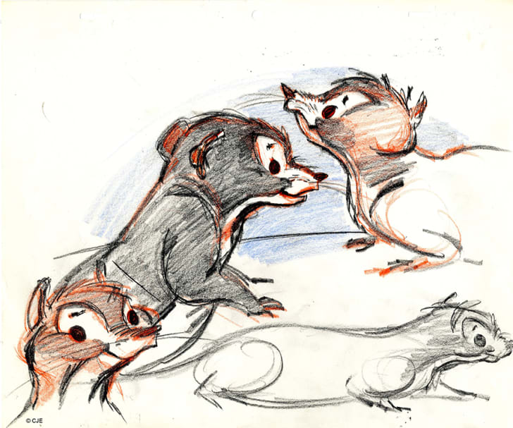Character concept sketches by Chuck Jones for Rikki Tikki Tavi showing the transition between what an actual mongoose looks like and what it might look like when it's animated.