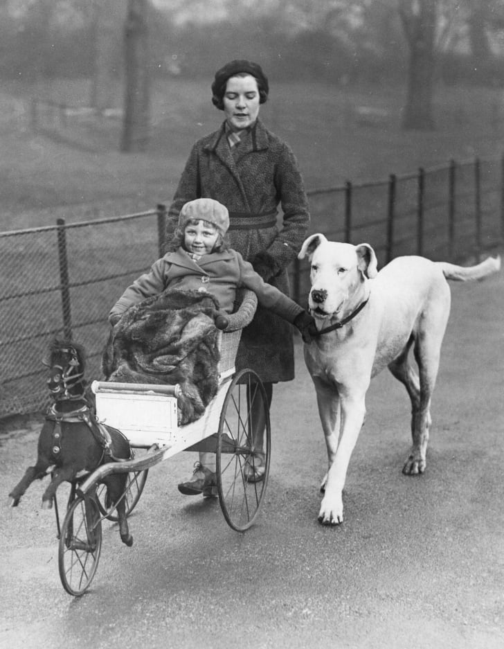 A small girl in a push chair modelled on a horse-drawn carriage, out for a stroll in Hyde Park, London, with her mother and a Great Dane