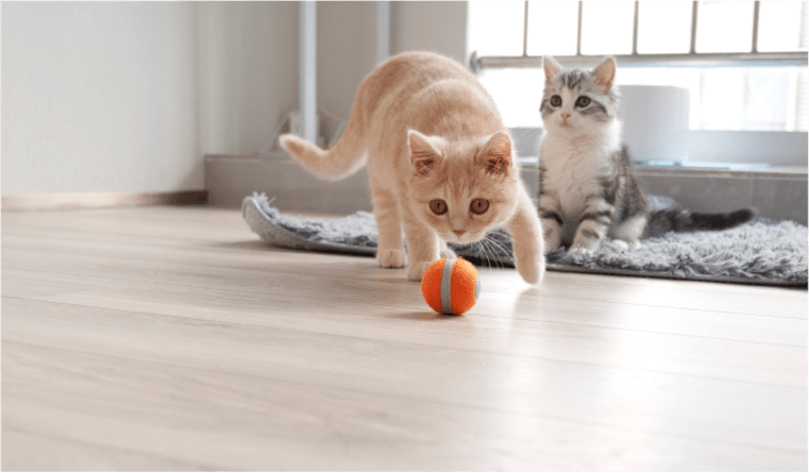 Cheerable cat toy on Kickstarter.