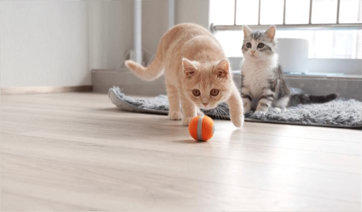 Cheerable cat toy on Kickstarter.