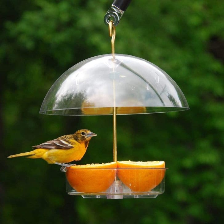 Droll Yankees bird feeder on Amazon.