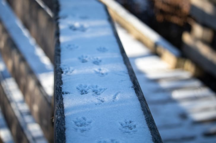 Squirrel Tracks in Snow on a Wooden Railing