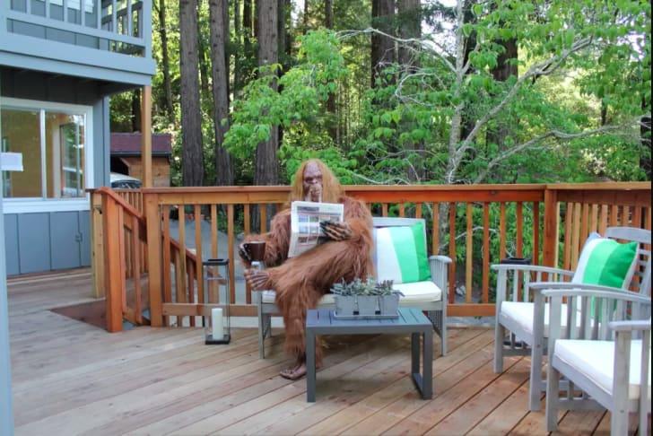 Bigfoot reading the newspaper.