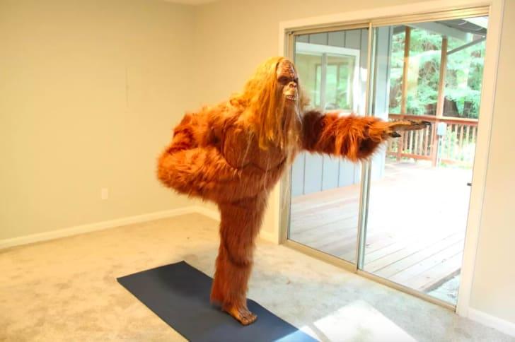 Bigfoot doing yoga.