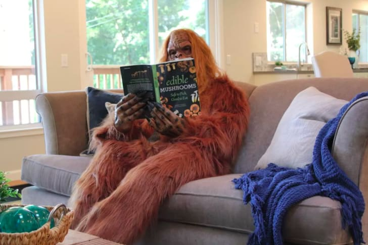 Bigfoot reading book.