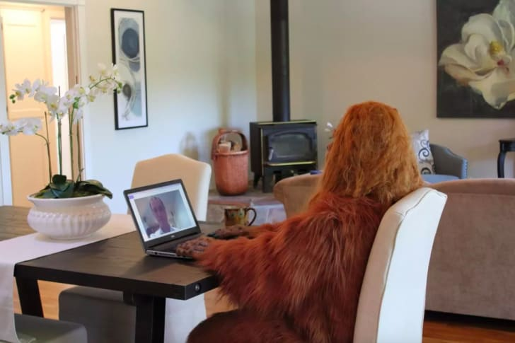 Bigfoot on the computer.