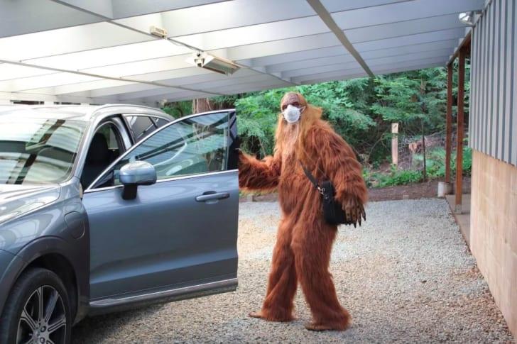 Bigfoot wearing a face mask.
