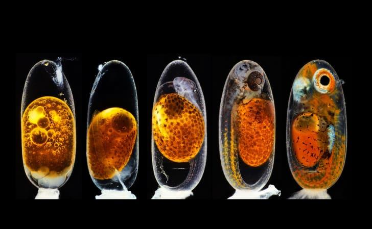 Descubra quem são os vencedores do concurso de fotografia microscópica da Nikon