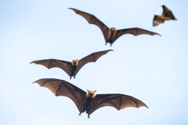 Bats flying on blue sky