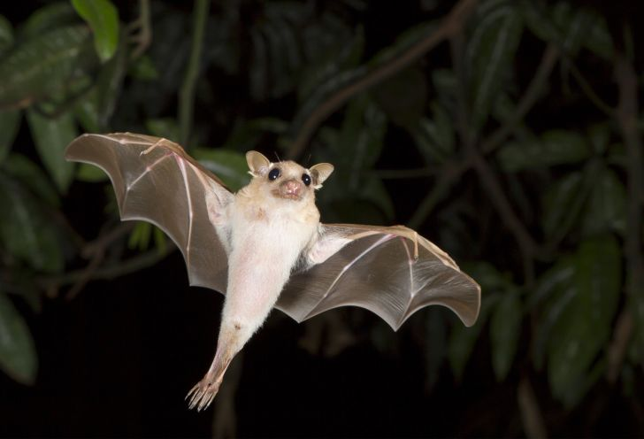 Bat flying in a forest at night