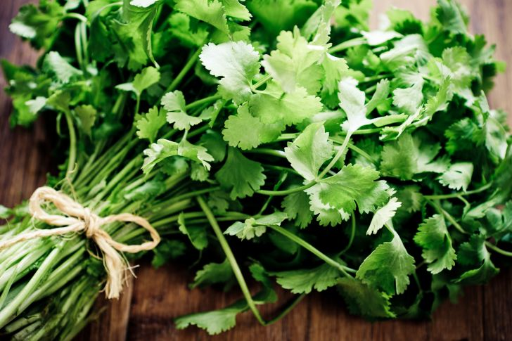 A bunch of cilantro tied together with a string