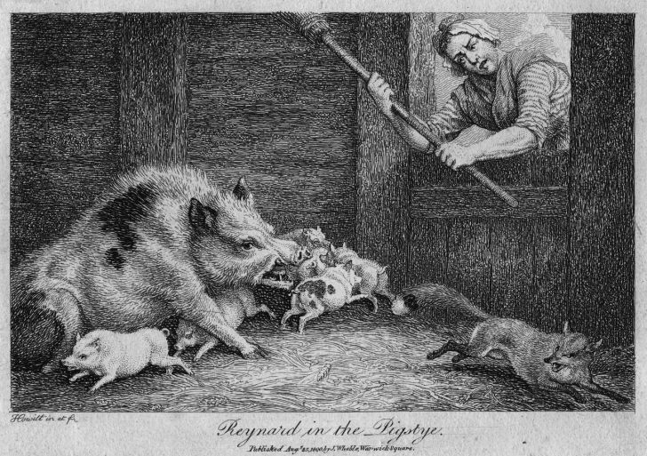 Entitled 'Reynard In the Pigstye,' circa 1737; a woman and her sow chase out a fox attacking piglets in a sty.