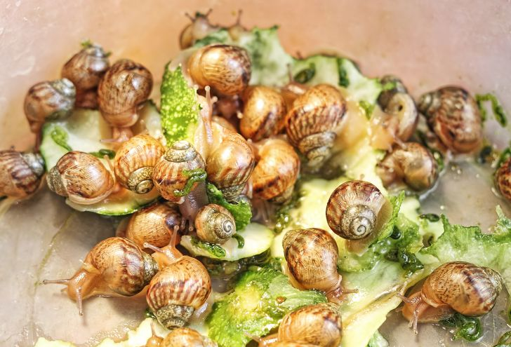 Group of snails.