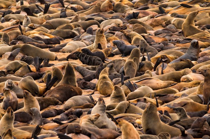 A large group of seals.