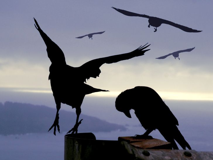Silhouette of crows at night.