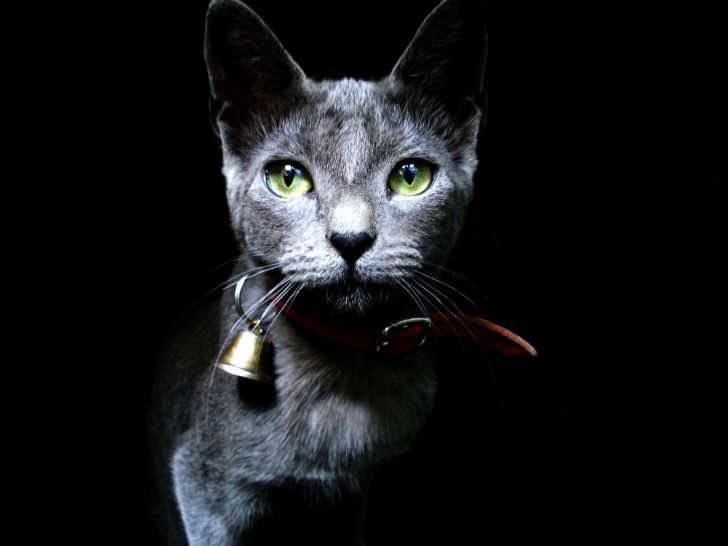 Black cat wearing a bell.