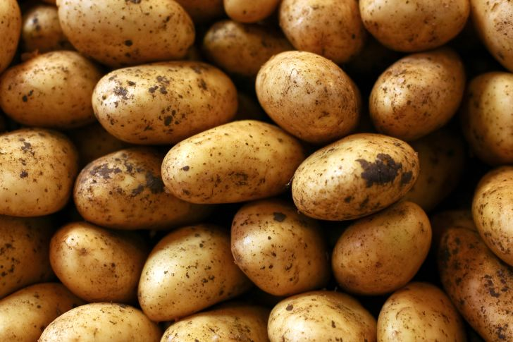 A pile of dirty, unwashed potatoes
