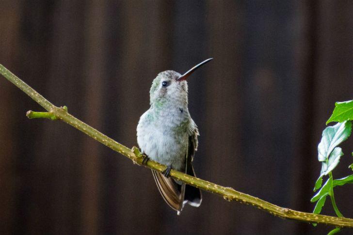 A hummingbird looks up into the sky