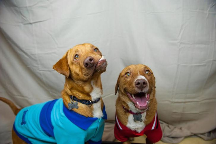 Shelter dogs Picasso and Pablo