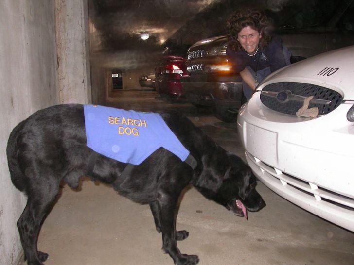 Photo of Jake the Rescue Dog