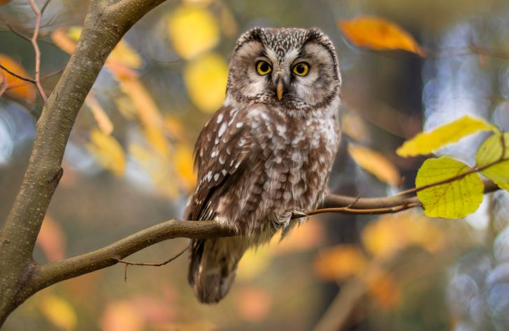 A photo of a brown owl perched on a branch.