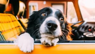 5 Ways to Help Your Dog When They Have Anxiety