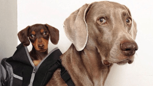5 Best Dog Carriers for Traveling