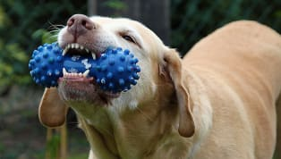 5 Ways to Get Your Dog to Stop Chewing Everything