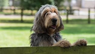 6 Rare Dog Breeds You've Probably Never Heard of