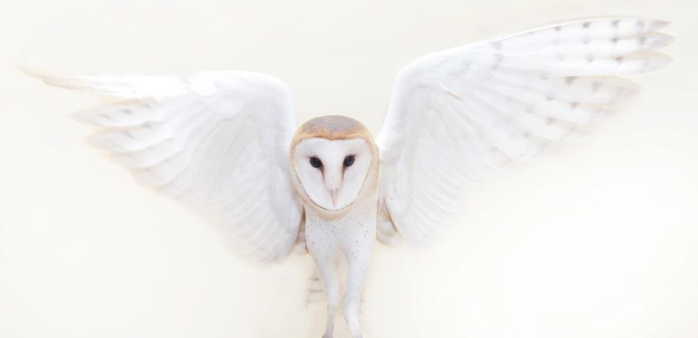 5. BARN OWL