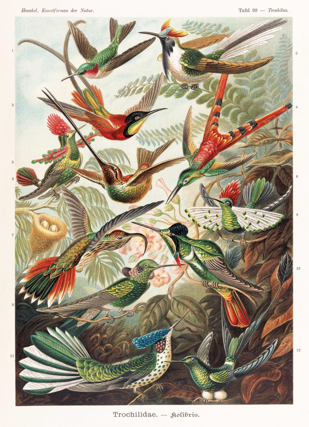 15. SAUROPSIDA-AVES