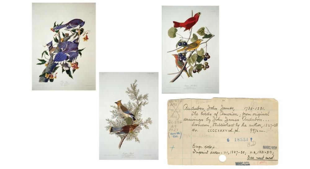 6. <em>THE BIRDS OF AMERICA; FROM THE ORIGINAL DRAWINGS</em> (1827-1838) // JOHN JAMES AUDUBON