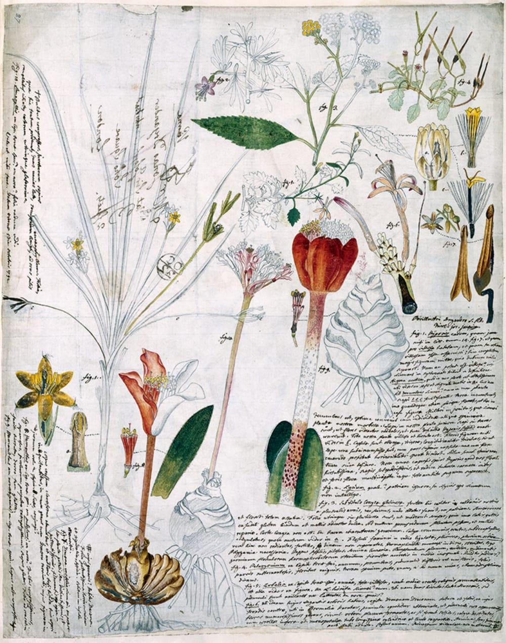 7. FLOWERING PLANTS