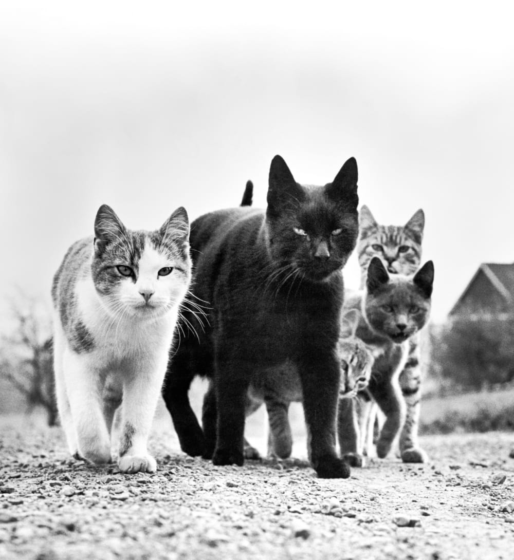 7. <em>The Mob</em>, New Jersey, 1961