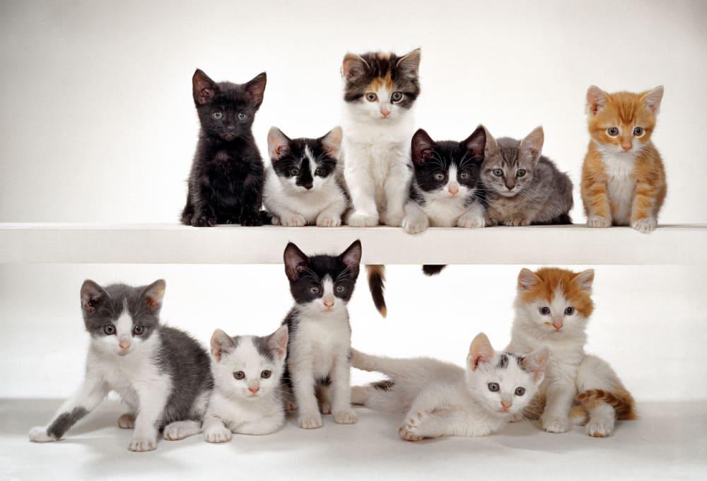 8. 11 Kittens, New Jersey, 1964