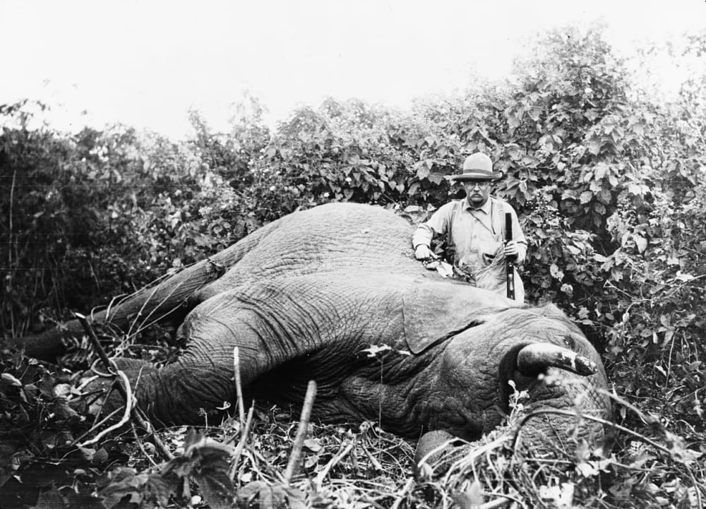 18. Theodore Roosevelt Poses with an Elephant He Killed in Africa