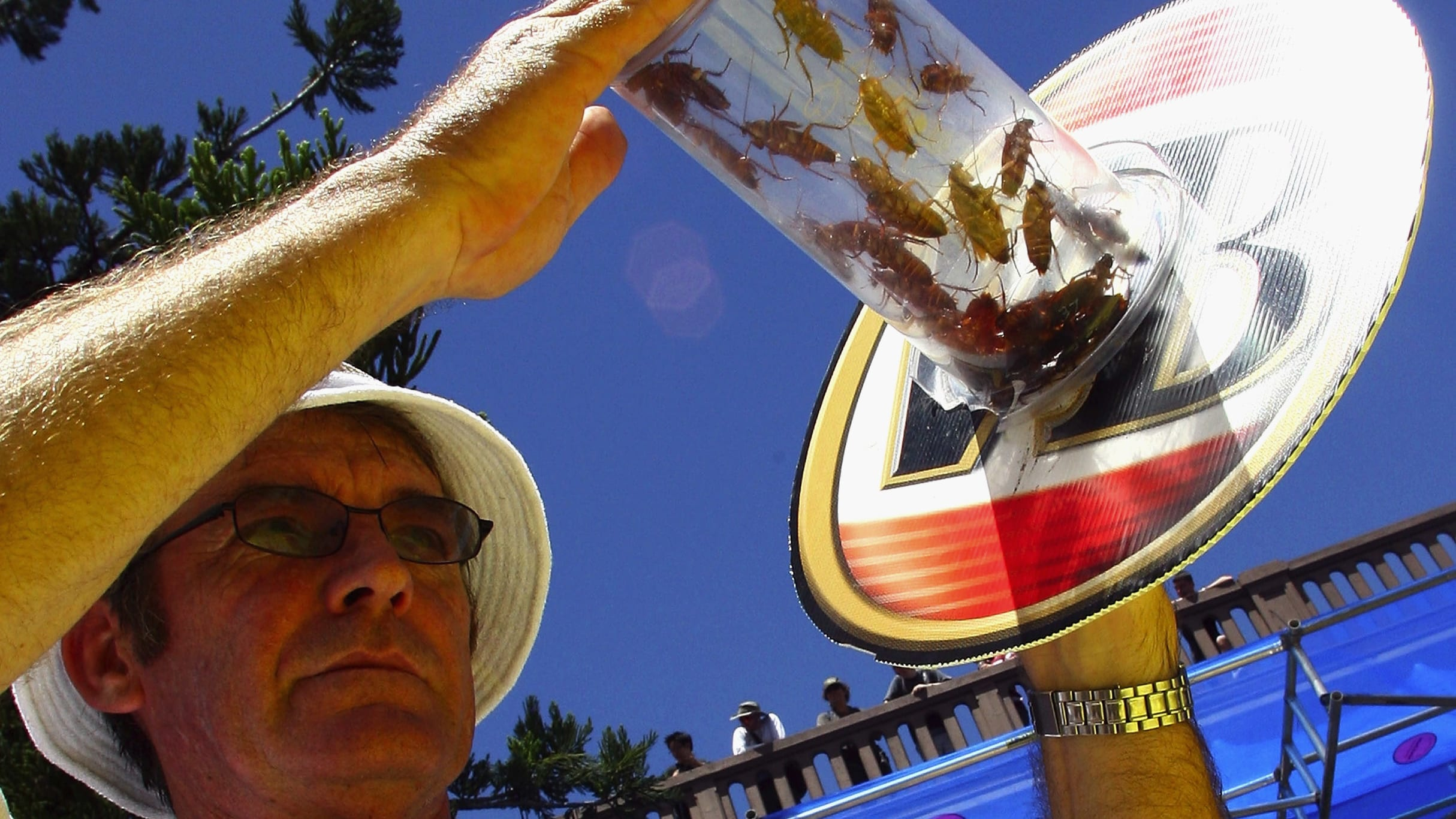 BRISBANE, AUSTRALIA - JANUARY 26:  A steward holds up the cockroaches shortly before the start of the race during the Australia Day World Championship Cockroach Races at the Story Bridge Hotel on January 26, 2008 in Brisbane, Australia.  (Photo by Bradley Kanaris/Getty Images)
